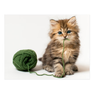 Kitten With Green Yarn Postcard
