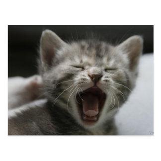 Kitten Yawning Postcard