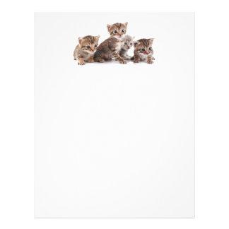 Kittens and more Kittens Letterhead
