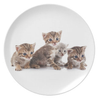 Kittens and more Kittens Party Plates