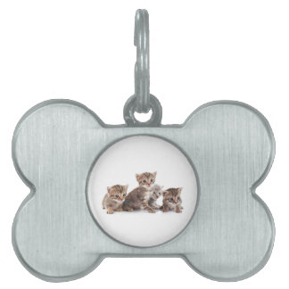 Kittens and more Kittens Pet Name Tags