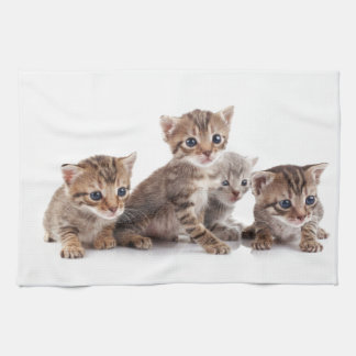 Kittens and more Kittens Towels