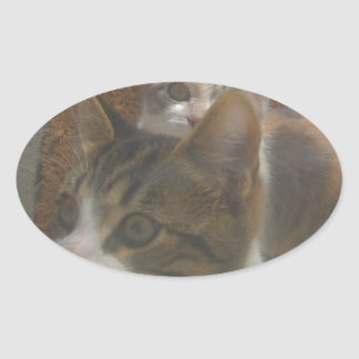 Kittens Growing Fast Oval Sticker