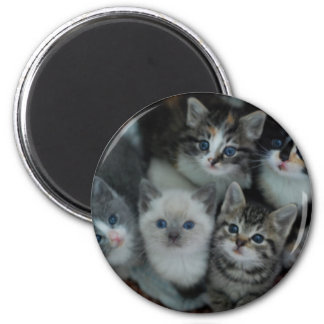 Kittens In A Basket 2 Inch Round Magnet