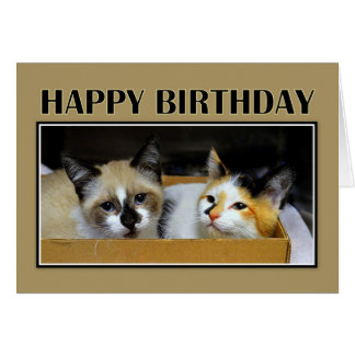Kittens in a Box Happy Birthday Card