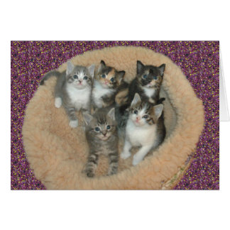 Kittens in a cat bed card