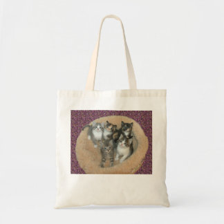 Kittens in a cat bed tote