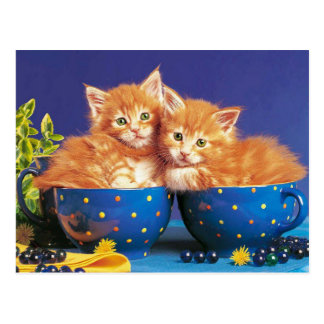 kittens in cup postcard