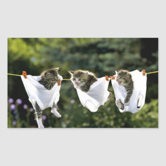 Kittens in underwear on clothesline