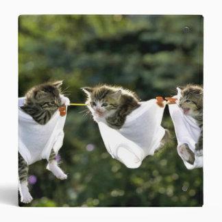 Kittens in underwear on clothesline binders