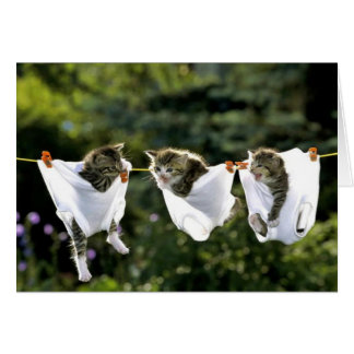 Kittens in underwear on clothesline card
