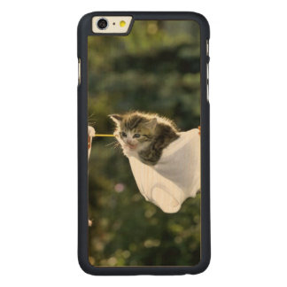 Kittens in underwear on clothesline carved® maple iPhone 6 plus case