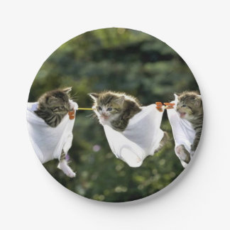 Kittens in underwear on clothesline paper plate