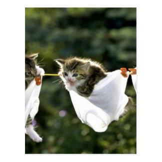 Kittens in underwear on clothesline postcard