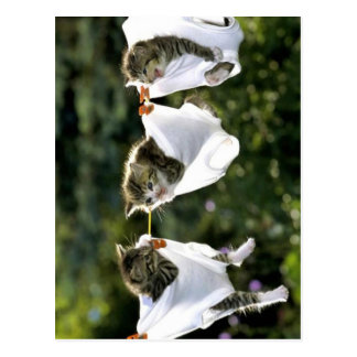 Kittens in underwear on clothesline postcard
