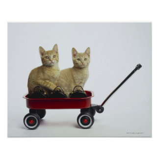 Kittens in wagon poster