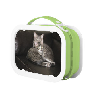 Kittens Photo Lunch Box