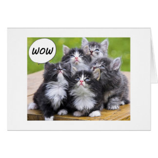 "KITTENS SAY WE FOUND OUT U R ON YOUR ""50th"" LIFE Card"