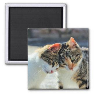 Kittens Square Magnet