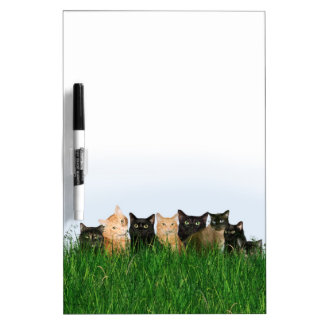 Kitties in grass dry erase board