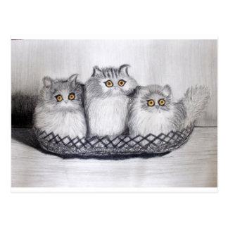 kitties postcard