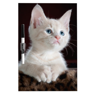 Kitty-6 Dry Erase Boards