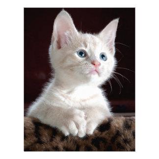 Kitty-6 Personalized Letterhead