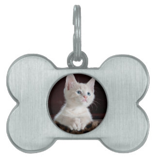 Kitty-6 Pet Name Tags