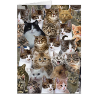 Kitty Cat Faces Pattern Card