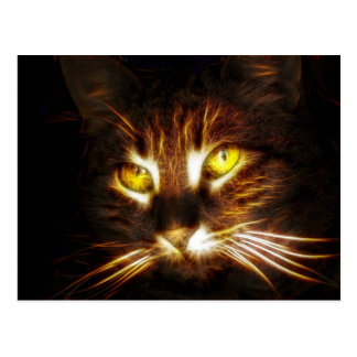 Kitty Cat post card