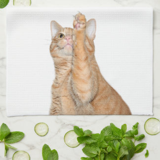 Kitty cat wants to dry dishes kitchen towel