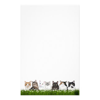 Kitty cats in daisies stationery