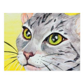 Kitty Closeup Postcard