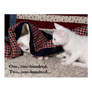 Kitty Hide-And-Seek Humor Post Card