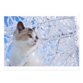 Kitty Ice Queen Postcard
