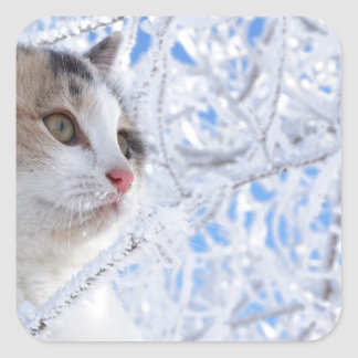 Kitty Ice Queen Square Sticker