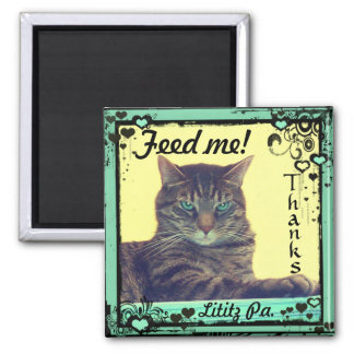 Kitty Inspirations Magnet tabby feed me!  Lititz