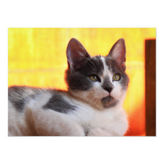 Kitty mignon au soleil carton d'invitation  13,97 cm x 19,05 cm