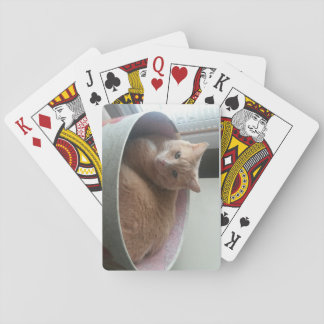 Kitty playing cards