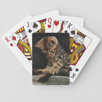Kitty playing with tail playing cards