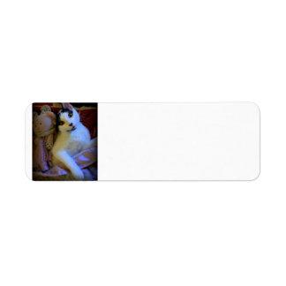 Kitty Sweet Dreams Return Address Label