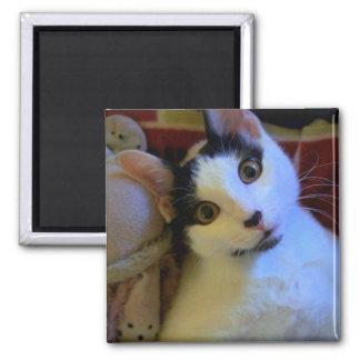 Kitty Sweet Dreams Magnet