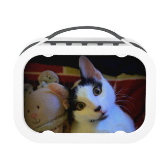 Kitty Sweet Dreams Yubo Lunchboxes