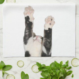 Kitty wants to dry dishes kitchen towel