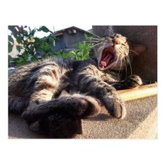 Kitty yawns postcard