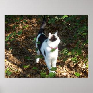 Kittypet's Wanderings Poster