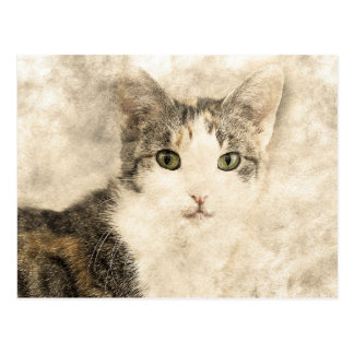 Kittys Full Attention | Abstract | Watercolor Postcard