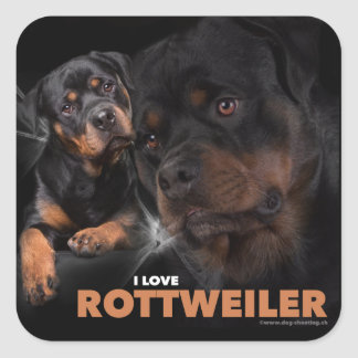 Kleber - Rottweiler Square Sticker