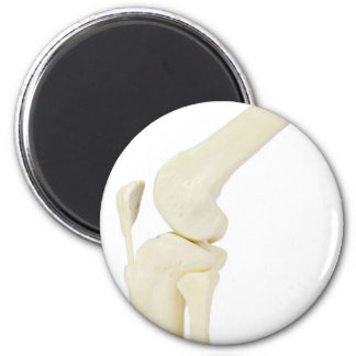 Knee joint model of human leg 2 inch round magnet