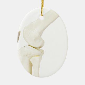 Knee joint model of human leg ceramic oval ornament